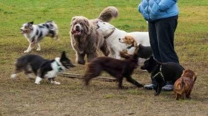 Parque de perros, una nueva experiencia