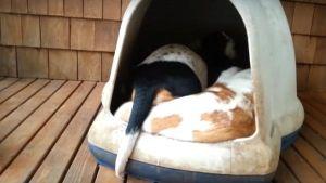 Perritos durmiendo todos juntos