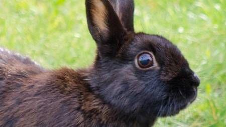 Conejo disfrutando de un baño