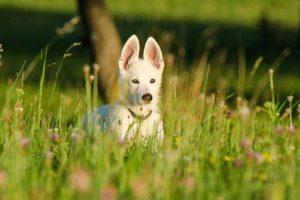 Los mejores antiparasitarios para cachorros