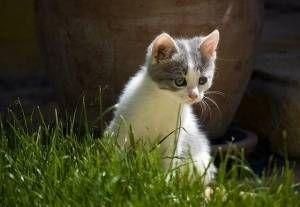 ¿Cuál es el mejor antipulgas para mi gato?