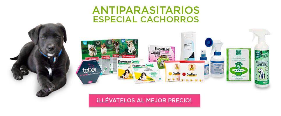 antiparasitarios_para_cachorros