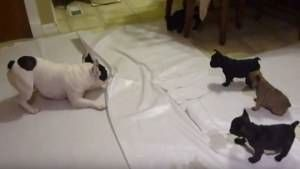 Papá perro jugando con sus cachorros