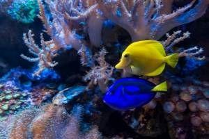 Cómo crear tu acuario
