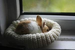 es-el-conejo-mi-mascota-ideal