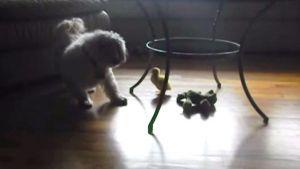 Perro se asusta de patito