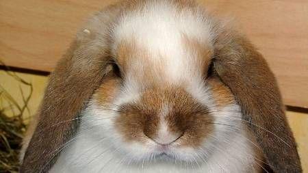Un conejos muy artista