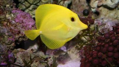Las enfermedades más comunes en los peces