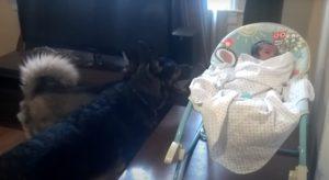 dos-perros-un-bebe