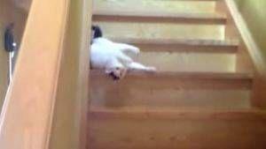 Gatos y escaleras