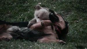 Oso y perro mejores amigos