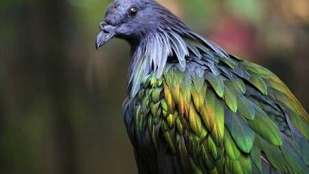 Un pájaro muy bromista
