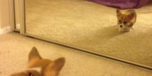 Los perros y los espejos