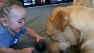 Bebés y perros, compañeros de aventuras