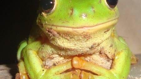 Una rana muy hambrienta