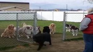 Unos perretes muy obedientes