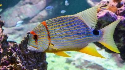 Cómo alimentar a nuestros peces durante nuestras vacaciones