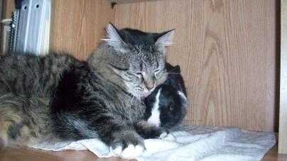 Gato y conejo como hermanos