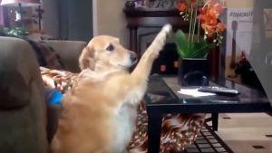 Cómo reaccionan los perros a la hora del baño