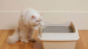 ¿Qué debo saber sobre los excrementos de mi gato?