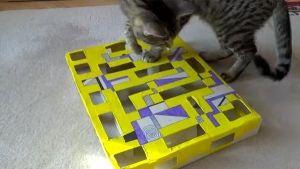 Gato juega con una caja sorpresa