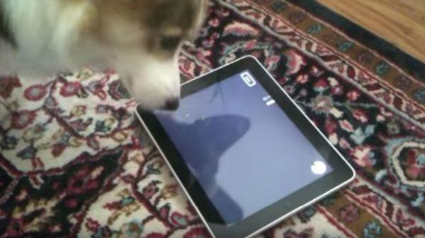 Mascotas que no se separan de su tablet