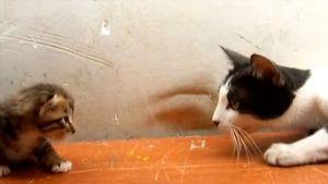 Así se comunican una mamá y su bebé gato