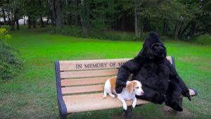 maymo-gorila-peluche