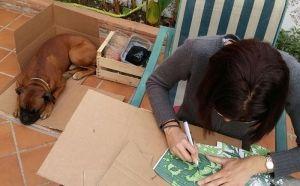 5 formas creativas de reutilizar las cajas de TiendAnimal