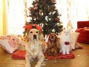 6 Razones para disfrutar de la Navidad con tu mascota