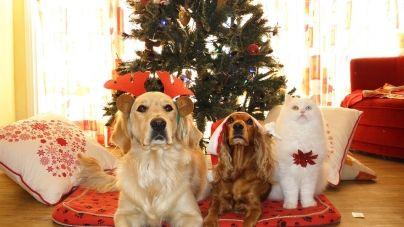 8 Razones para disfrutar de la Navidad con tu mascota