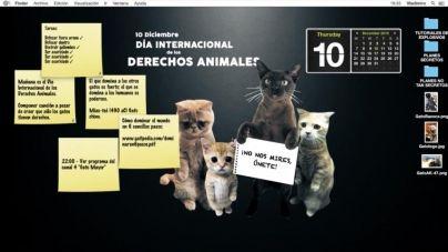 Día Internacional de los Derechos Animales – QMDC 1×03