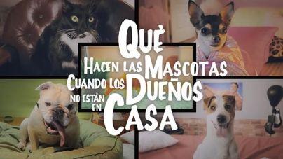 Qué hacen las Mascotas cuando los Dueños no están en Casa – QMDC 1×01