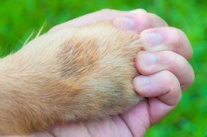6 Razones por las que amamos a los animales