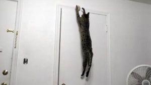 El gato antigravedad