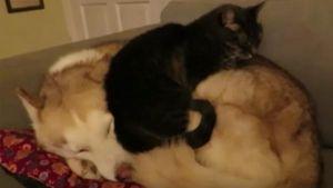 Gato y perro duermen acaramelados