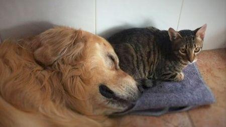 ¿Qué pasa si perros y gatos viven juntos en la misma casa?