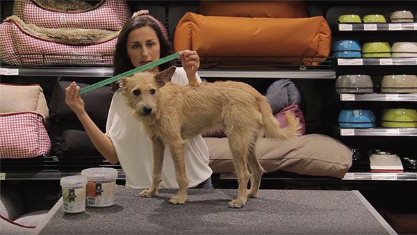 Ropa para Perros, ¿Cómo acertar con la Talla?