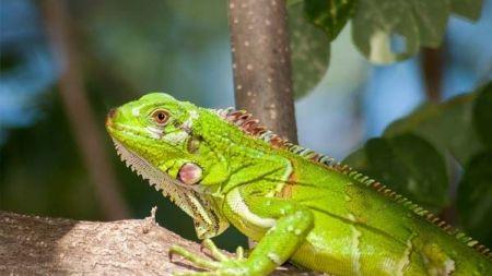 Anfibios y reptiles: cómo cuidarlos adecuadamente