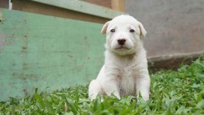 Cómo es el carácter de los perros cachorros cuando son adultos