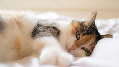 ¡Celebra el Día Internacional del Gato!