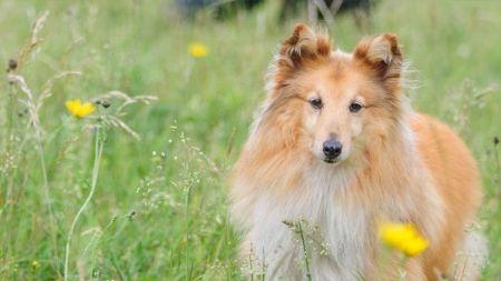 Cómo enseñar a un perro: transmítele paciencia y serenidad – Parte I