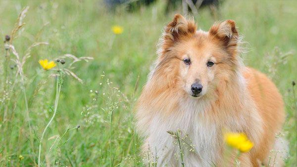 Cómo enseñar a un perro: transmítele paciencia y serenidad