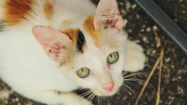 Comportamiento de los gatos: cómo detectar problemas y resolverlos