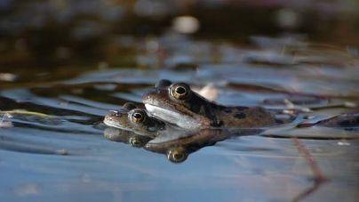Enfermedades de los anfibios más frecuentes