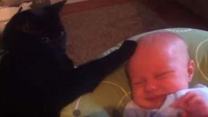 Gato relaja y duerme al bebé de la familia