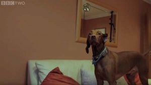 ¿Los perros tienen noción del tiempo?