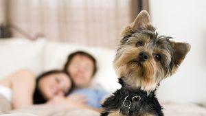 Películas de animales: las mascotas más memorables del cine