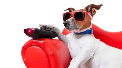 Películas de perros: descubre los perros más famosos del cine