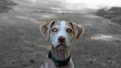 Las 10 razas de perros raras más llamativas